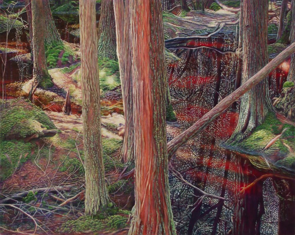 Cedar Swamp 4